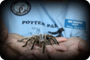 arachnofobia